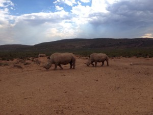 African Skies Travel Connection Rhino Aquila Jan 2014